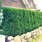 Как создать недорогую и красивую изгородь